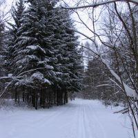 Forest, Старбеево