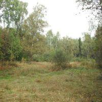 поляна в Химкинском лесу, Старбеево