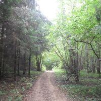 13 сентября 2010 Химкинский лес, Старбеево