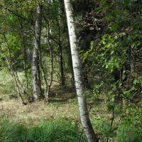 в Химкинском лесе, Старбеево