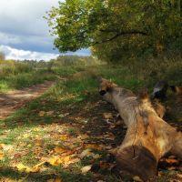 Листопадные истории, Старбеево