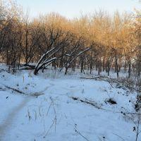 Дорога к пруду через парк усадьбы Петровское-Лобаново, Старбеево
