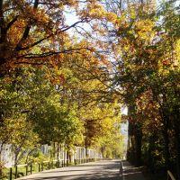 Осень/Autumn (по дороге в Пусково), Сходня