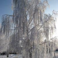 В ледяном плену, Тишково