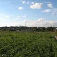 Пруд с поля, Тишково