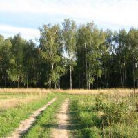 Дорога вела к лесу..., Тишково