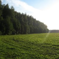Зеленый поворот, Тишково