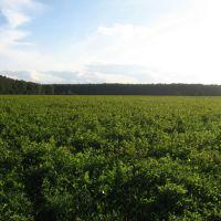 Через зеленое поле, Тишково