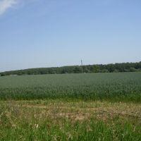 поле (2010 июль), Тишково