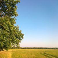 Дерево на поле, Тишково