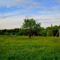 Яблоня у дороги на ферму, Тишково