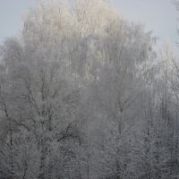Ледяной лес. 2010, Тишково