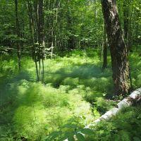 Лес в конце мая, Тишково