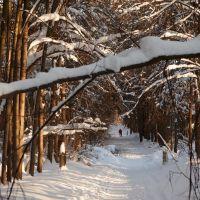 Томилинский лес, Томилино