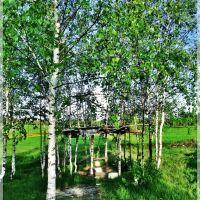 Birches, Томилино