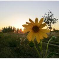 Sun and Flower, Томилино