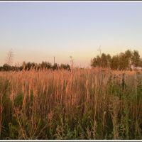 Summer field, Томилино