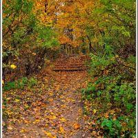 _autumn motive_, Томилино