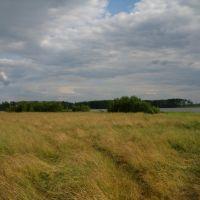 Свиношное, луга у В берега. Swinoschnoye, meadows at the E coast, Туголесский Бор