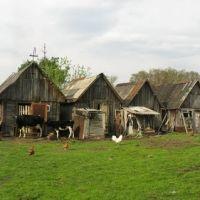Сараи, Туголесский Бор