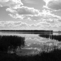Свиношное озеро сквозь солнцезащитные очки, Туголесский Бор
