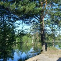 Кладбищенский пруд. The cemetery pond, Туголесский Бор