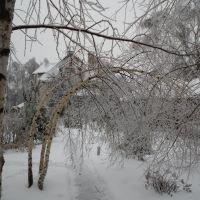 Белые берёзки гнутся от мороза, Успенское
