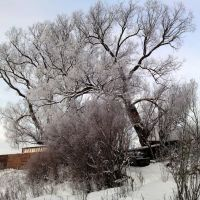 Деревья на склоне, Успенское