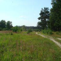 Поляна,лес,дорога., Фосфоритный