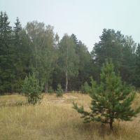 Мещерский лес., Фосфоритный