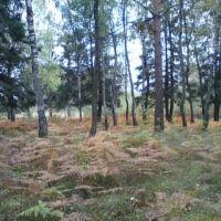 Осенний папоротник., Фосфоритный