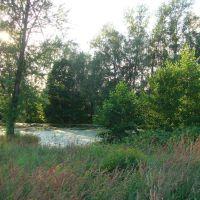 Старый пруд., Фосфоритный