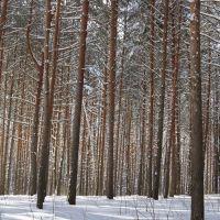 Сосновый лес, Хорлово