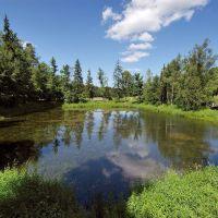 болотце в Абрамцево, Хотьково