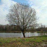 Дерево на озере, Черкизово