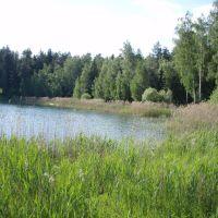 озеро южное, Черноголовка