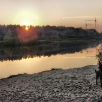 закат и собака, Черноголовка