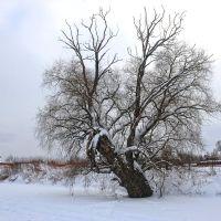 2013-01-24, Чехов