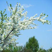 Весна на дачах, Шатурторф