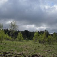 Тучи над лесом, Шаховская