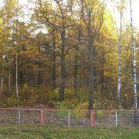 Лес за решеткой, Шереметьевский