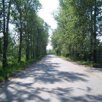 Дорога в Хлебниково, Шереметьевский