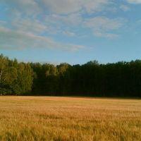 Темный угол светлого поля / Dark part of light field, Щербинка