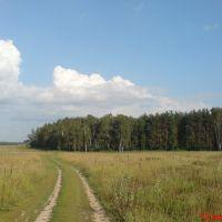 ::В поле у Александровки::, Щербинка