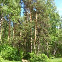 ::Дорожка в лесу::, Щербинка