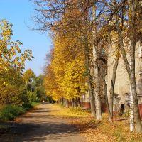 Золотая осень, Электросталь