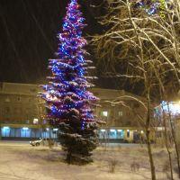 Ёлка на площади Ленина, Ковдор