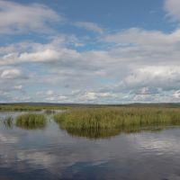 камыш на Нижнекаменском озере, Конда