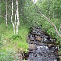 Малый Кротов ручей в августе 2005 года., Мурмаши