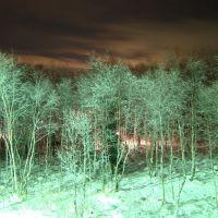 Зимний лес, Мурмаши